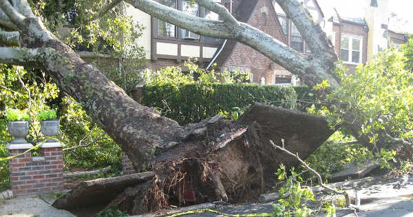 Tree Damage Fort Myers FL