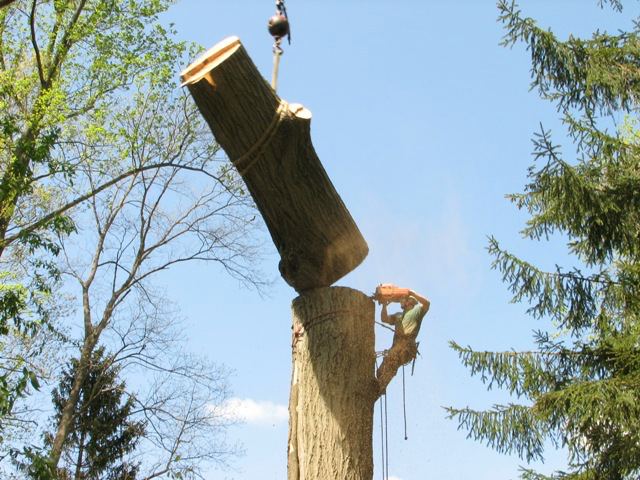 Tree trunk removal Fort Myers