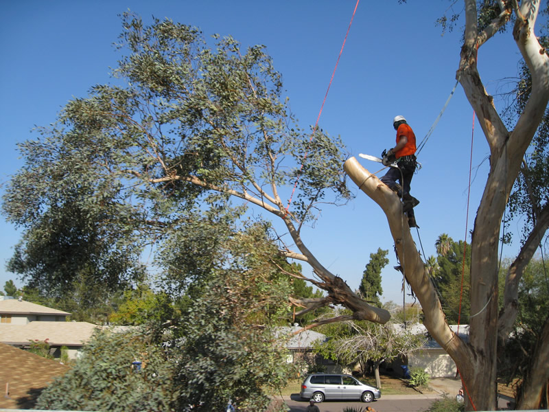 Tree Removal in Fort Myers