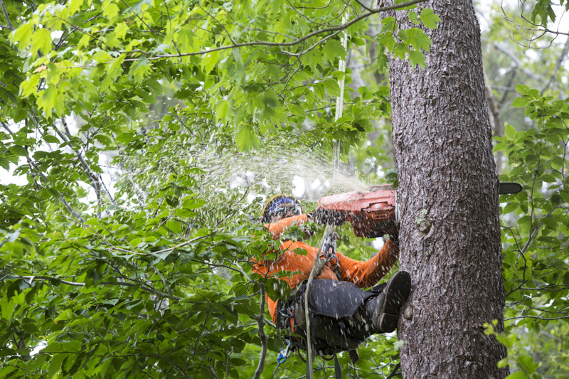 Tree Removal Service Fort Myers, Florida